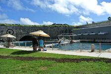 Dolphin Quest area at National Museum of Bermuda.jpg